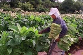 La Cámara del Tabaco informó que la Nación aprobó el presupuesto para la Obra Social